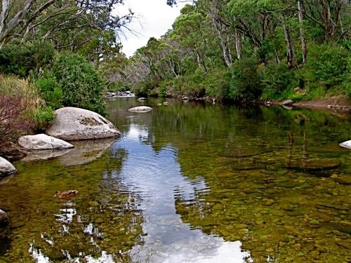 thredbo-river-ngarigo