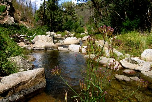 Jacobs River - Barry Way