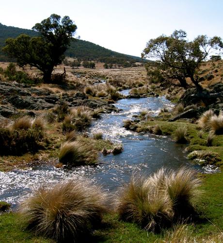 Rendevous Creek aka Little River